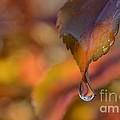 Drip In Pink -1 Long by Rae Ann  M Garrett