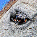 Eye Of A Horse by Alice Gipson