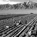 Farm Workers And Mount Williamson by Ansel Adams