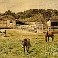 Feral Horses Of Ocracoke by Dawn Gari