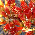 Fiery Orange Flower by Beverly Guilliams