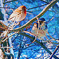 Finch And Blue Jay - California Winter Day by Douglas MooreZart