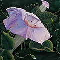 First  Trumpet Flower  Of Summer by Sharon Duguay