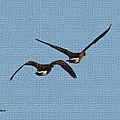Fleeing Geese by Tom Janca