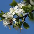 Flower And Bee by Ginka Atanasova
