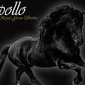 Friesian Stallion by Royal Grove Fine Art