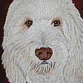 Golden Doodle  by Peggy Holcroft
