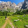 Hiking In Contrin Valley by Antonio Scarpi