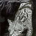 Jaguar Or Jacaranda  by Jack Pumphrey