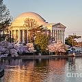 Jefferson Memorial Spring by Susan Cole Kelly
