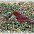 Kissing Cardinals by Victoria  Dauphinee