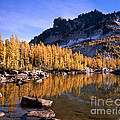 Larches Line Leprechaun Lake by Tracy Knauer