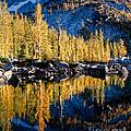 Leprechaun Lake Larches by Tracy Knauer