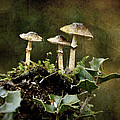 Little Mushrooms by RicardMN Photography