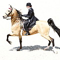 Lovely Gaited Buckskin  by Alice Gipson