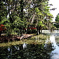 Magnolia Plantation Gardens by Christiane Schulze Art And Photography