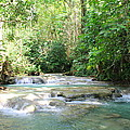 Mayfield Falls Jamaica by Debbie Levene