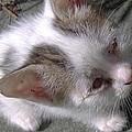 New Kitten's Debut by Trudy Brodkin Storace