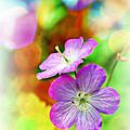 Ohio Wildflower with Texture