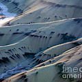 Painted Hills 7 by Tracy Knauer