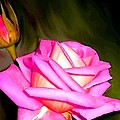 Painted Pink Rose by Will Borden