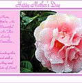 Pink Camellia - Happy Mother's Day by Joyce Dickens