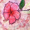 Pink Hibiscus by Terry Fleckney
