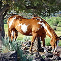 Pinto In The Pines by Gerry Childs