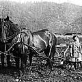 Plowing The Land C. 1890 by Daniel Hagerman