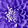 Pretty In Magenta by Dora Sofia Caputo Photographic Design and Fine Art