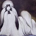 Pretty Showdog Shih Tzu by Melinda Saminski