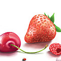Red Fruits by Veronica Minozzi