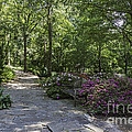 Rhododendron Garden by John Zawacki