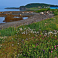 Rocky Harbour In Gros Morne Np-nl by Ruth Hager