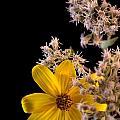 Shy Yellow Flower by Sandra Clark