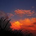Sky Palm  by KingdomScience Technology--david n stilwell