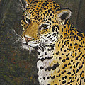South American Jaguar by Elaine Booth-Kallweit