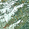 Spring Drops by Sonali Gangane