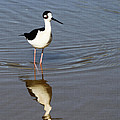 Stilt Looking At Me by Tom Janca