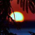Sun Fusion by William Bartholomew