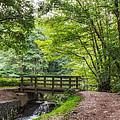 The Bridge Birches Valley Cannock Chase by Ann Garrett