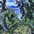 The Garden by Douglas Barnard