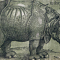 The Rhinoceros by Albrecht Durer