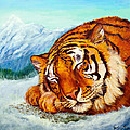 Tiger Sleeping In Snow by Bob and Nadine Johnston