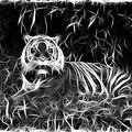 Tiger Spirit by Steve McKinzie