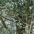 Tree Branch by Jeelan Clark