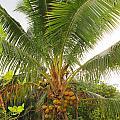 Westmoreland Jamaica 4 by Debbie Levene