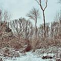 Woodland Walk by Dave Godden