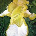 Yellow Iris by Vera Lysenko