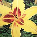 Yellow Lily by Sharon Duguay